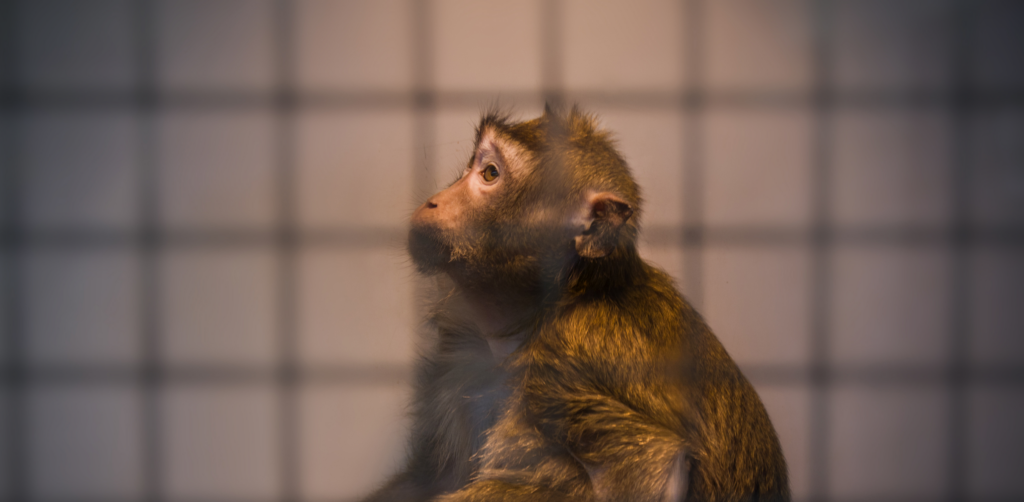 A macaque sits under artificial lighting behind a wired cage walls