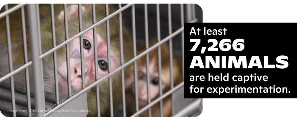 At OHSU, at least 7,266 ANIMALS are held captive for experimentation.