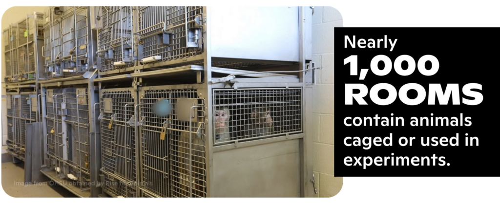 Nearly 1,000 ROOMS contain animals caged or used in experiments.