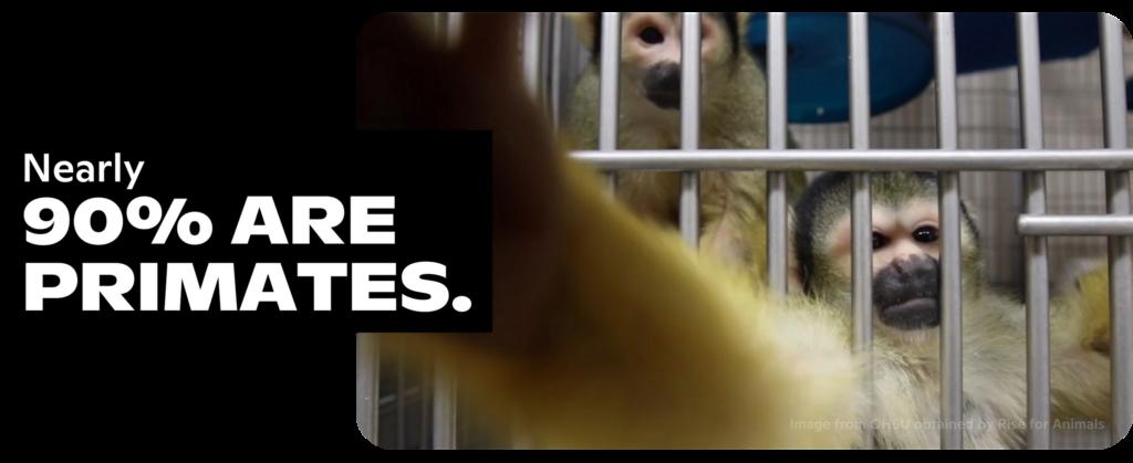 Nearly 90% are primates.