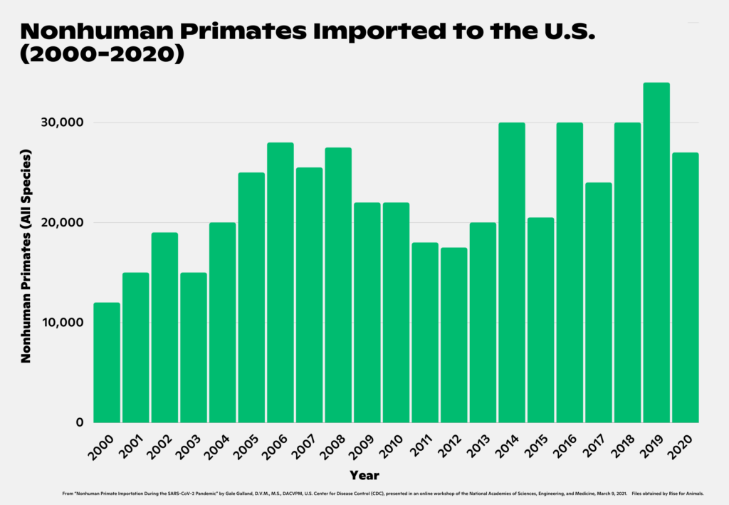 "Bar graph illustrating ""NHP Imports, All Species (2000-2020)."" Year / Number of NHPs (approximate). 2000 / 12,000; 2001 / 15,000; 2002 / 19,000; 2003 / 15,000; 2004 / 20,000; 2005 / 25,000; 2006 / 28,000; 2007 / 25,500; 2008 / 27,500 ; 2009 / 22,000; 2010 / 22,000; 2011 / 18,000; 2012 / 17,500; 2013 / 20,000; 2014 / 30,000; 2015 / 20,500; 2016 / 30,000; 2017 / 24,000; 2018 / 30,000; 2019 / 34,000; 2020 / 27,000. 20 year total = 482,000"